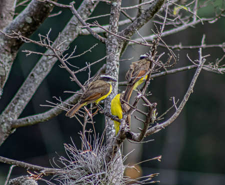 A bird perched on a tree branch 版權商用圖片