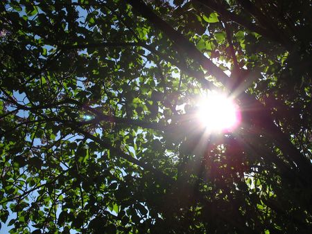 Sun through the Tree