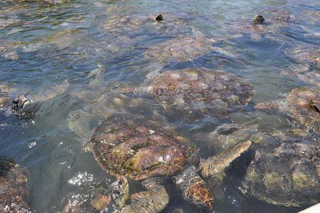 Turtles Archivio Fotografico