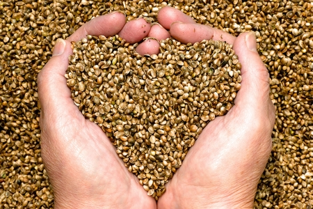Hemp seeds held by woman hands, shaping a heart Stock Photo