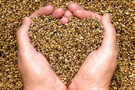 Hennep zaden in handen van vrouw handen, het vormgeven van een hart