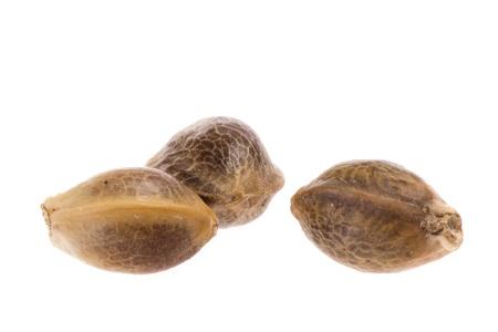 Close up photo of hemp seeds isolated on white