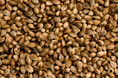 Hemp seeds for example for bird winter feeding or healthy eating