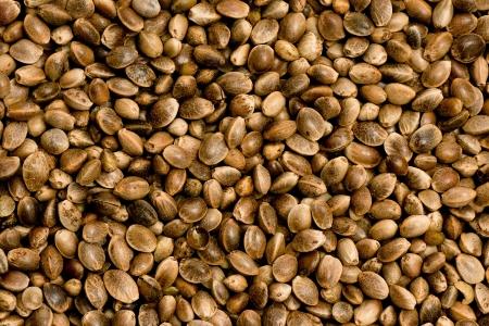I semi di canapa per esempio per il bird alimentazione invernale o mangiar sano