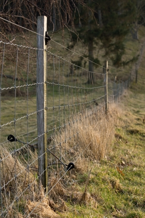 electric fence: Electric fence with trees in the background Stock Photo