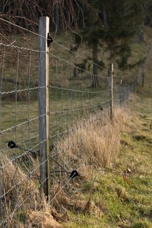 elektrischer Zaun: Elektrischer Zaun mit B�umen im Hintergrund