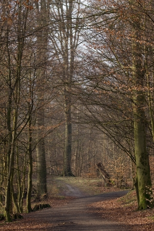 road and path through: Forest road and path through the autumn forest