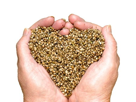 Hemp seeds held by woman hands shaping a heart and isolated on white