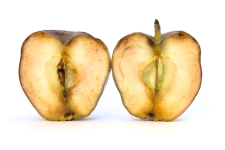 Old apple cut in two half on white background photo