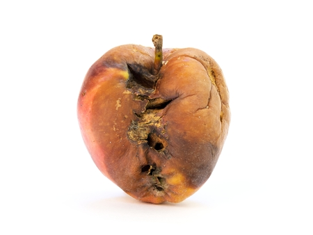 decomposed: Old rotten apple with large DOF on white background