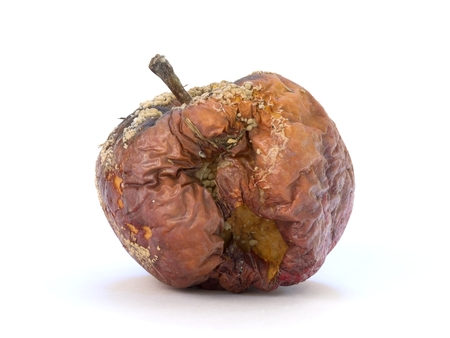 Old rotten apple with large DOF on white background photo