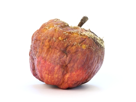 bad apple: Old rotten apple with large DOF on white background