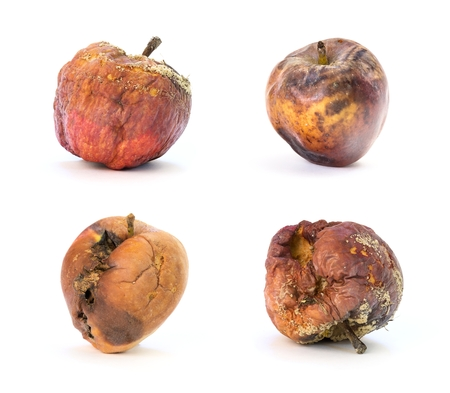 Photo set of old rotten apples on white background Stock Photo
