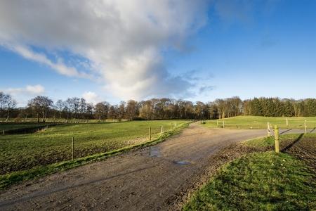 elektrischer Zaun: Weiden mit Elektrozaun Feldweg und B�ume