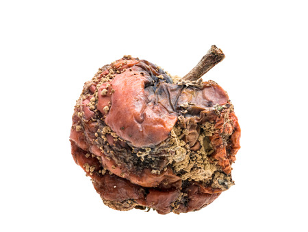 bad apple: Rotten apple with wrinkles and fungus on white background