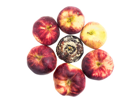 bad apple: Top view of circle of fresh apples with a rotten apple in the middle on white background