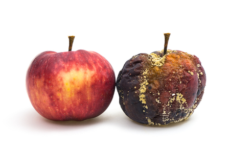 bad apple: A fresh and a rotten apple next to each other Stock Photo