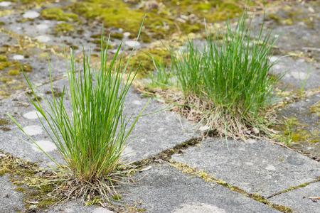 grass growing in the cracks between garden tiles stock photo 57339838 - Garden Tiles
