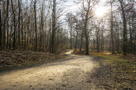 Dirt path in forest in early spring with no leaves on the trees Stock Photo
