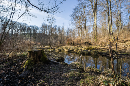 Forest landscape with tree stump and small lake in early spring
