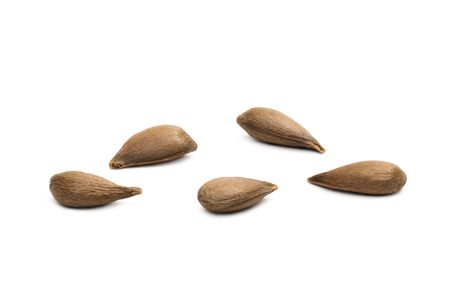 Close up of five apple seeds on white background seen from above Stock Photo