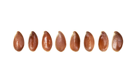 Close up of some linseeds or flax seeds arranged standing up on a horizontal line isolated on white