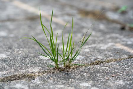 Grass growing in the cracks between garden tiles Stockfoto
