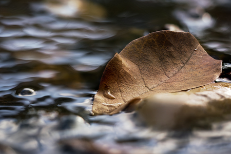 Close up of single brown autumn leaf in a stream of water Stock Photo