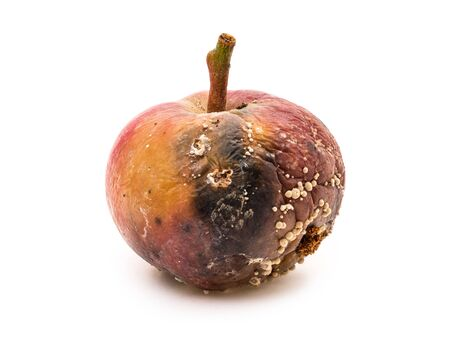 Bad and rotten apple with fungus isolated on white background