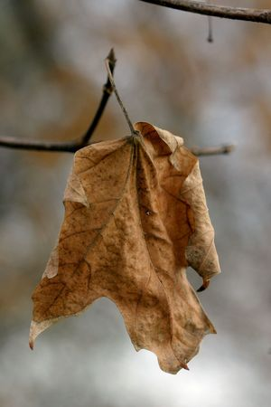 Dying Leaf photo