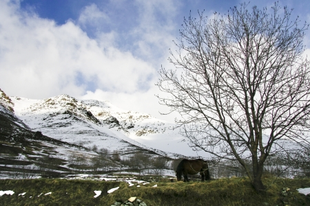 extensive: Horse grazing free at snowy landscape at Aiguestortes i Estany de Sant Maurici National Park, the second in the Pyrenees and the only one in Catalonia,  in the Pyrenees