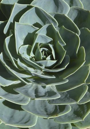 plants species: Ci sono piante grasse diverse specie di piante che provengono dalle zone aride dei tropici, subtropicali, semi-deserto, e il deserto che � stato introdotto nel giardino andaluso con successo, questo � un esempio di questo Archivio Fotografico