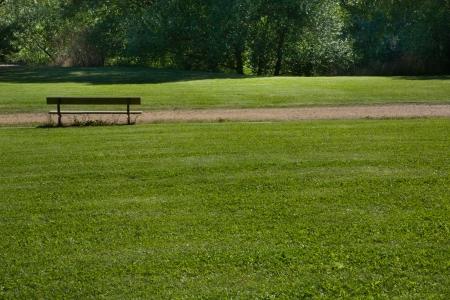 plants species: A garden bench in mulch beside a grassy lawn