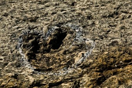 biped: Cape Espichel footprint detail of a small biped carnivorous dinosaur on a rock a Theropod, Sesimbra, Portugal Stock Photo