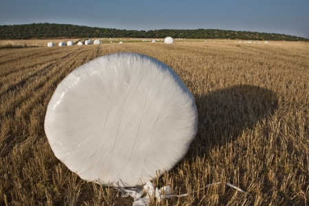 badajoz: Packed hay rolls in white plastic on the meadow, Badajoz, Extremadrua, Spain