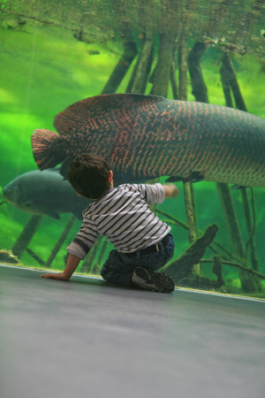 aquarium tank: Children observing the fish of a tropical aquarium tank