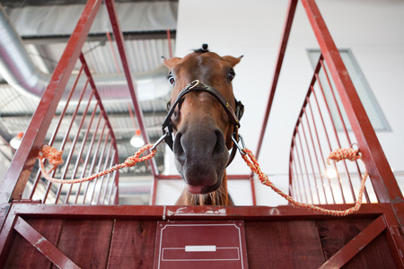 hobby hut: Horse portrait standing in manege box. Low angle shot Stock Photo