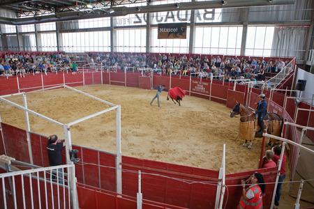 red heifer: BADAJOZ, SPAIN, JUNE 21  Bullfighter exhibition indoors during the Bullfighting and Horse Festival, on June 21, 2014 in Badajoz, Spain