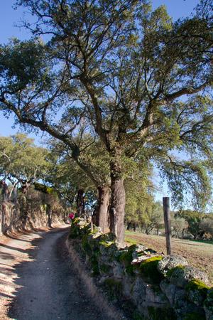 Treeking on Natural environment in Valencia de Alcantara between granitic batholiths and cork oaks, Extremadura Spain photo