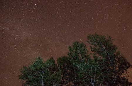 poplars: Starry night an poplars landscape, Guadalajara, Spain