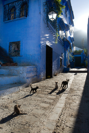 Pets on Street in medina of blue town Chefchaouen, Morocco  photo