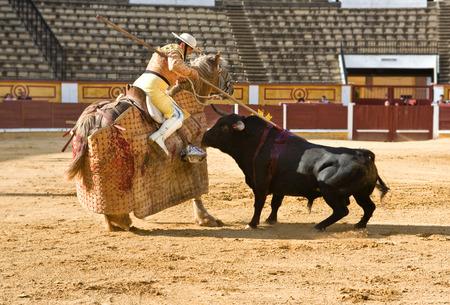 badajoz: Badajoz, Spain - May 11: Training bullfight behind closed doors, on May 11, 2010 in Badajoz, Spain.  The lancer wounding the bull