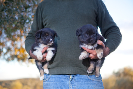stride: Cute adorable baby dogs in the arms of a man, Extremadura, Spain