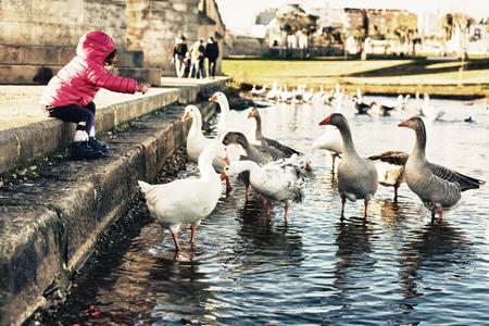 badajoz: Toddler girl feeding geese beside the historical bridge of Palmas, Badajoz, Spain Stock Photo