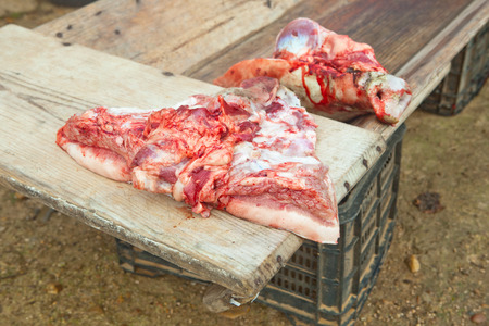 butchered: Pieces of pig over wooden trough. Traditional home slaughtering in a rural area, Extremadura, Spain