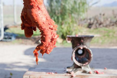 slaughtering: Farmer mano piena di carne solo dopo la miscelazione per ottenere chorizo ??o salsicce. Macellazione casa tradizionale in Extremadura, Spagna Archivio Fotografico