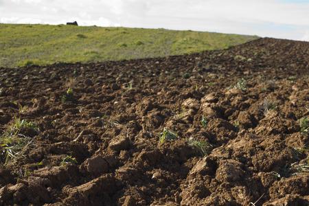 begining: Campo Appena plouged a primavera inizi, Badajoz, Spagna