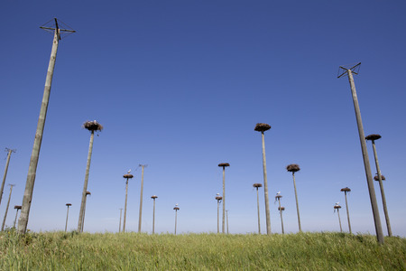 procreation: Storks colony in a protected area of Malpartida de Caceres, Spain Stock Photo
