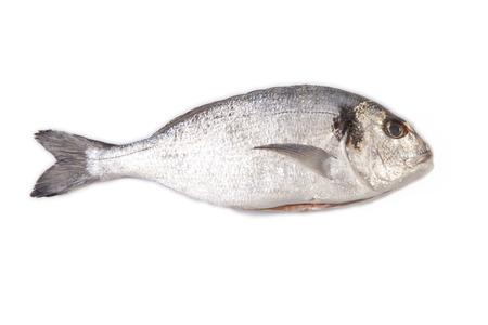 sparus: Raw and clean sea bream fish. Isolated over white background