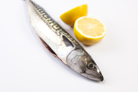 gutted: Fresh raw mackerel fish or Scomber scrombrus. Isolated over white background
